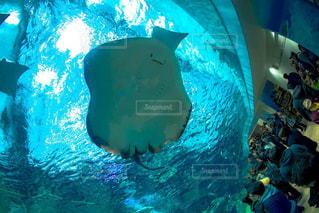 水族館の写真・画像素材[336407]