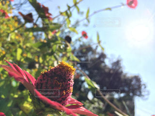 花の写真・画像素材[340115]