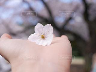 春の写真・画像素材[438772]