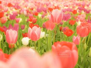 花の写真・画像素材[496512]