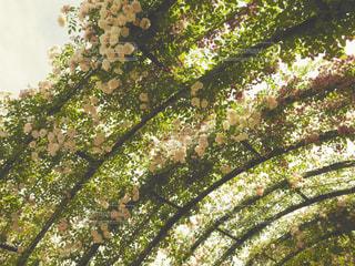 花の写真・画像素材[548104]