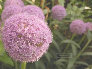 花の写真・画像素材[573892]