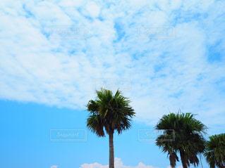 ヤシの木とビーチの写真・画像素材[1111937]