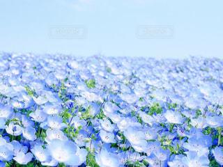 近くの花のアップの写真・画像素材[1111942]