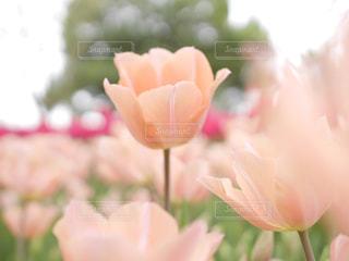近くの花のアップの写真・画像素材[1183342]