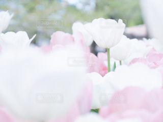 近くの花のアップの写真・画像素材[1183344]