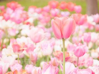 近くの花のアップの写真・画像素材[1183345]