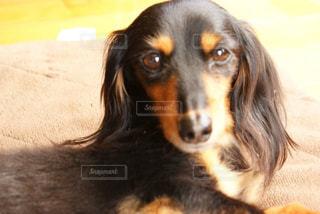 犬の写真・画像素材[336631]