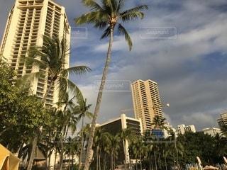 背の高い建物とヤシの木の都市の景色の写真・画像素材[1016360]