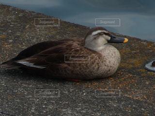 No.338594 鳥