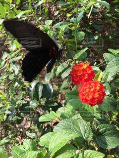 花の写真・画像素材[338708]