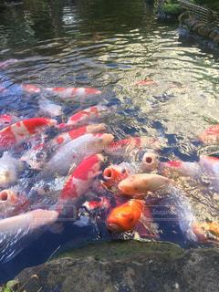 池 - No.339912