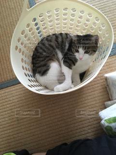 ボウルに座って猫の写真・画像素材[1399152]