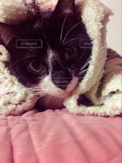 猫の写真・画像素材[338709]