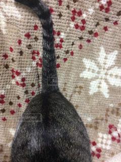 No.338731 猫