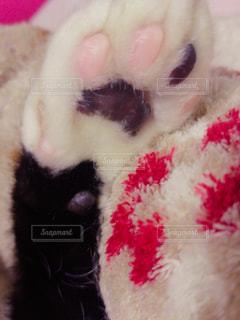 猫の写真・画像素材[339944]