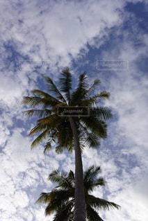 空の写真・画像素材[338543]