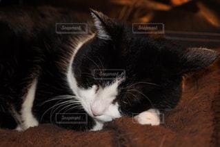 猫の写真・画像素材[338622]