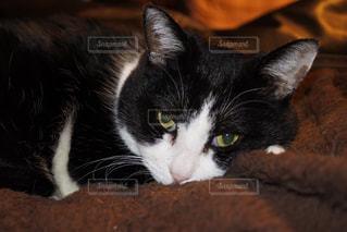 猫の写真・画像素材[338624]