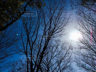 空の写真・画像素材[339266]