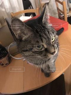 猫の写真・画像素材[338633]