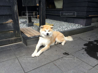 犬の写真・画像素材[346760]