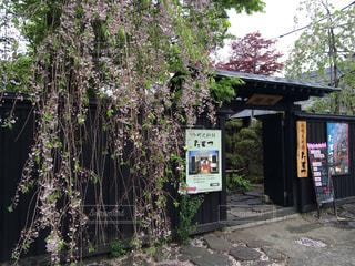 桜の写真・画像素材[347101]
