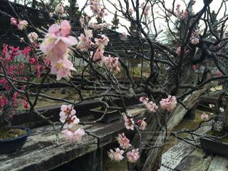 春の写真・画像素材[348292]