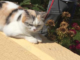 猫の写真・画像素材[353044]