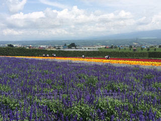 花畑の写真・画像素材[359214]