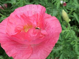 花の写真・画像素材[379610]