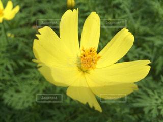 花の写真・画像素材[379611]