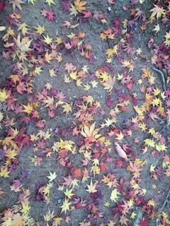 秋の写真・画像素材[379876]