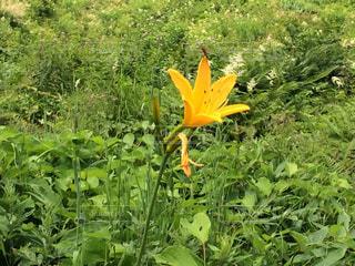 花の写真・画像素材[380141]