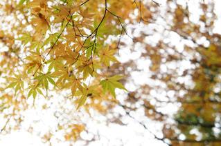 秋の写真・画像素材[339061]