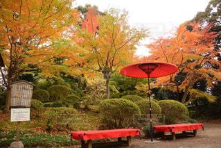 秋の写真・画像素材[339062]