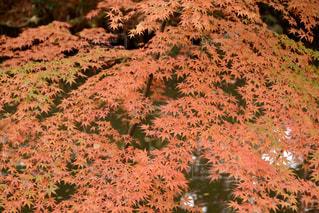 秋の写真・画像素材[342837]