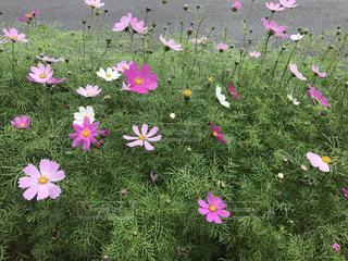 花の写真・画像素材[347119]
