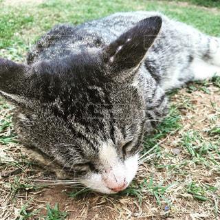 猫 - No.339396
