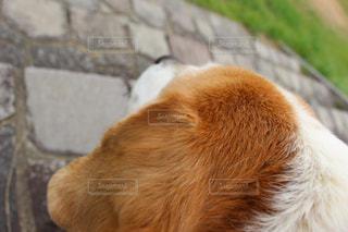 犬 - No.341484