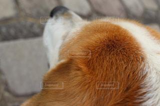 犬 - No.341606