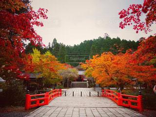 秋の写真・画像素材[339532]