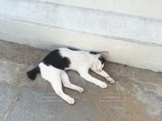 野良猫の写真・画像素材[339728]