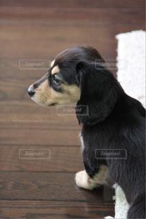 犬の写真・画像素材[340734]