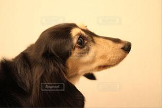 犬の写真・画像素材[340738]