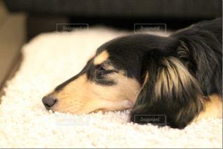 犬の写真・画像素材[340740]