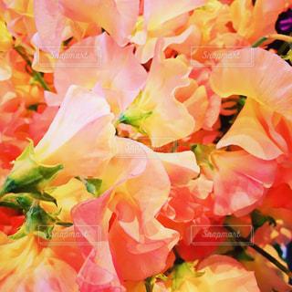 花の写真・画像素材[339880]
