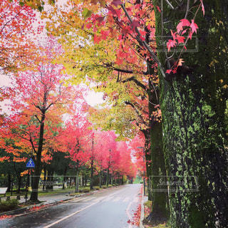 秋の写真・画像素材[339899]