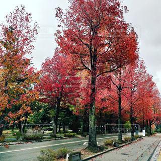 秋の写真・画像素材[340491]
