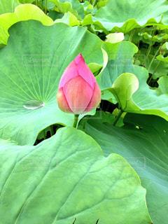 花の写真・画像素材[649116]